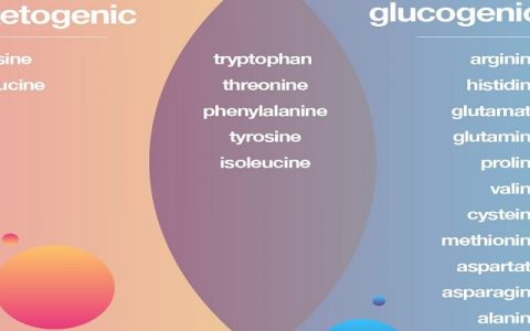 leucine and lysine